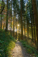 Weg im Wald mit warmen Sonnenstrahlen