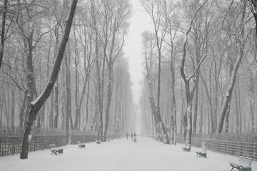 Park in snow in Saint Petersburg