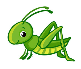 Vector isolated cute green grasshopper on a white background.