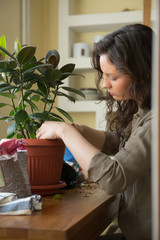 Woman planting ficus tree in pot with gardening set
