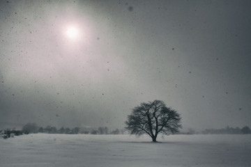 Lonely Tree in the Winter