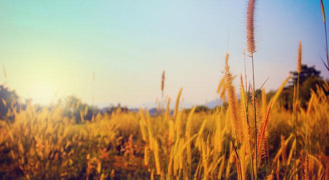 Grass flower evening mood.