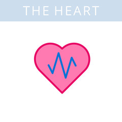 The internals outline icon. Heart and heartbeat symbols. Viscera and inside organs vector linear pictograms. Thin line medical and anatomy infographic elements for web, presentation, network.
