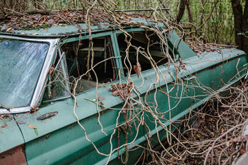 An old abandoned car being overtaken by vines