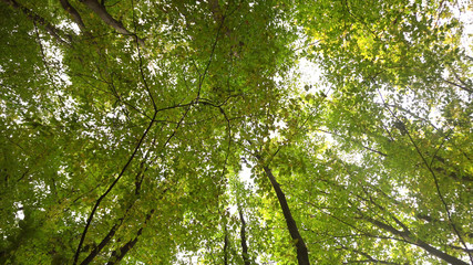 Under Trees Looking Up In A Forest