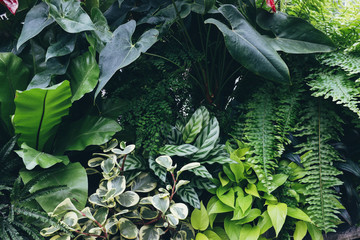 Lush tropical plants growing in greenhouse conservatory