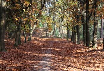 Forest Utrechtse heuvelrug in autumn