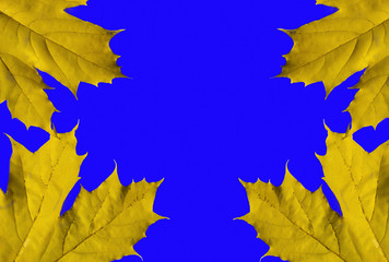 maple leaf on a blue background