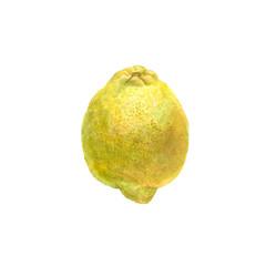 Botanical watercolor illustration of yellow lemon isolated on white background