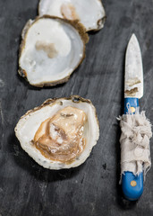 Oysters on blackboard with knife opener