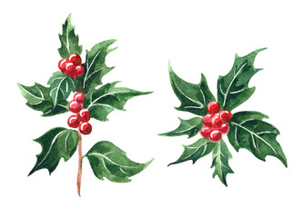 holly branch with berries, watercolor botanical illustration, Christmas holly hand drawn floral element.  Illustration for Christmas and new year greeting cards, invitations, print