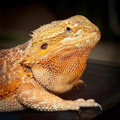 Close up dragon