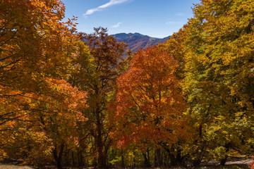 Monti del Parco Nazionale d'Abruzzo, sottobosco