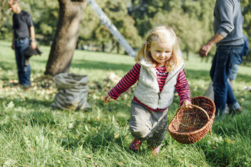People: Girl with wicker basket on a meadow collecting apples
