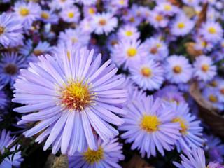 pink flowers nature garden spring