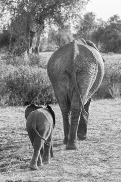 Elephant walking with her offspring