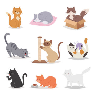 Funny cartoon cats characters different breeds illustration. Kitty young pet