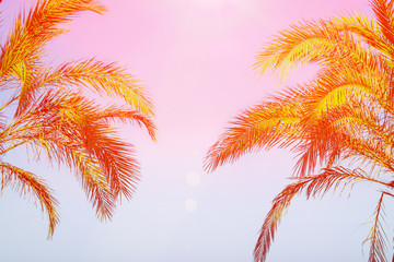 Two Palm Trees on Toned Purple Blue Pink Sky Background Golden Sun Flare. Frame Border Composition Copy Space for Text. Tropical Foliage Vacation Ocean Beach