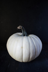 isolated white pumpkin with stem on dark background