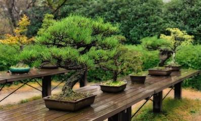 色々な盆栽