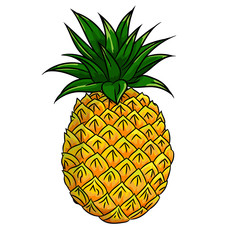 Illustration of Pineapple -Vector Illustration