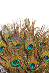 Peacock feathers on white background.