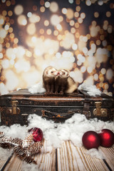 Fototapete - Frettchen küssen sich zu Weihnachten