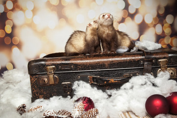 Sticker - Frettchen lieben die Weihnachtszeit