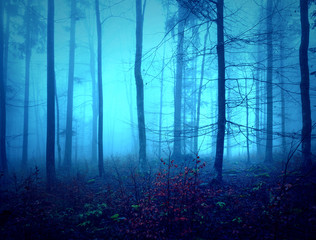 Wall Mural - Dark creepy blue saturated foggy forest trees landscape. Color filter effect used.