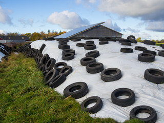 Large heap of silage as animal fodder covered in rubber tires and white plastic on farm in North Germany