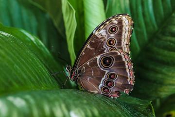 farfalla occhi acquario genova