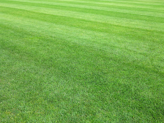 perfect lawn green grass background