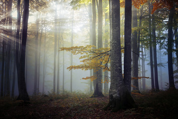Keuken foto achterwand Bos in mist Autumn landscape of a beautiful forest