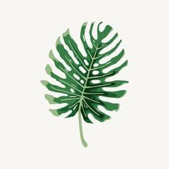 Monstera tropical large rain leaf illustration vector