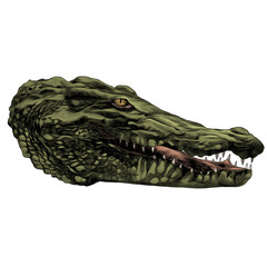 crocodile sketch head vector graphics color picture