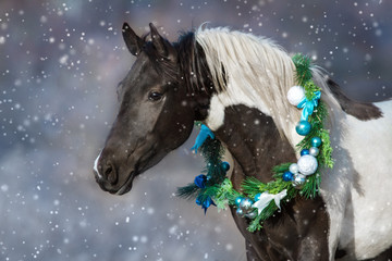Horse portrait in christmas decoration wreath