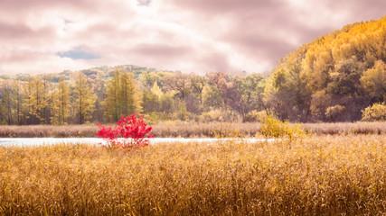 Beautiful autumn scene at cities