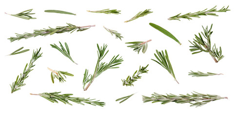 Fresh green rosemary leaves and twigs at different angles on white background