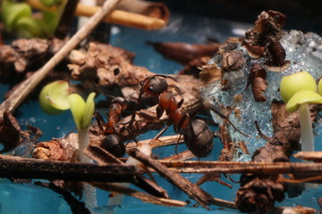 Жизнь муравья крупным планом