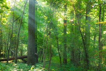 Sonnenstrahlen in einem Wald im Herbst