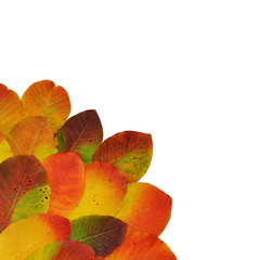Bright multicolored autumn leaves on a white background.Red and colorful foliage colors in the fall season