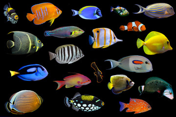 Set of tropical saltwater fishes on black background