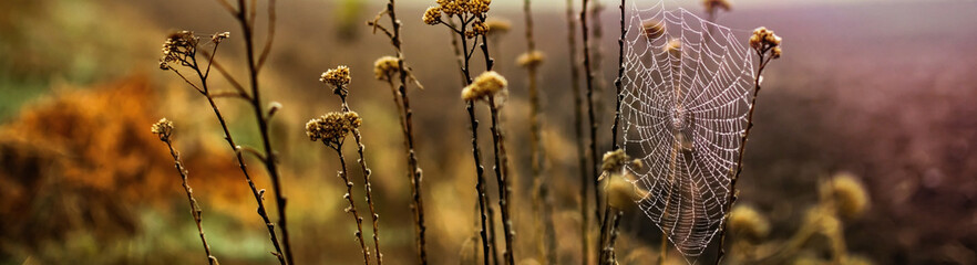 Foggy autumn field with dry wild herbs. Blurred Background