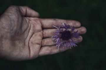 Obraz Fioletowy kwiat na dłoni - fototapety do salonu
