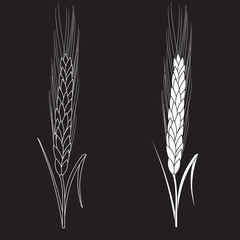 Black ang white wheat isolated on black background