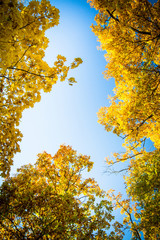 Autumn background. Autumn leaves against sky. Bottom view.
