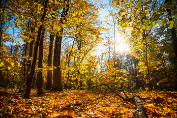 Autumn background nature landscape outdoor. Fallen forest.