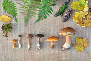 Flat lay of edible forest mushrooms, leaves and cones