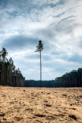 Lonely tree above sand