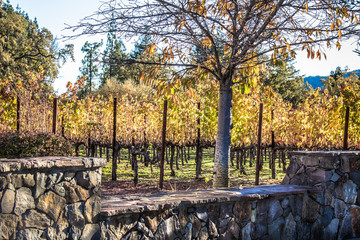 Colorful vineyard behind stone fence